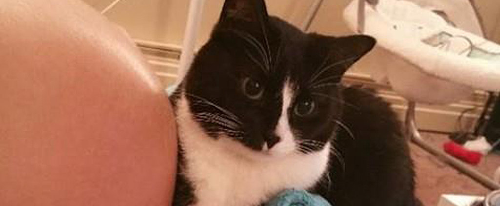 Meet Panda, the Adorable Cat Who Protected Her Owner's Baby Bump For 9 Months