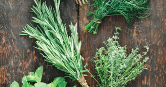 3 Herbs Italian Food Lovers Should Have In Their Home