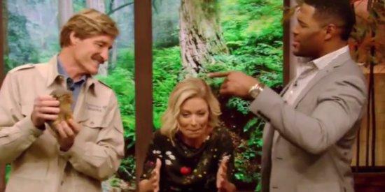 Blame This Armadillo For Kelly Ripa's Delish Michael Strahan Shade