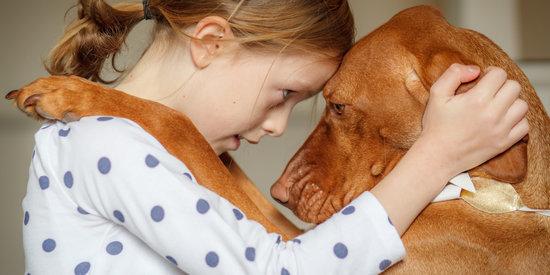 The Reasons Why I Need To Hug My Dogs