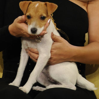 Name Famously Furry Faces: Jack Russell Terrier Edition!