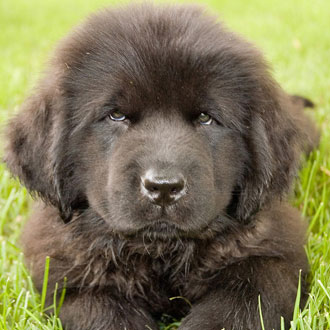 Puppy Breed Quiz 2011-03-21 16:00:00