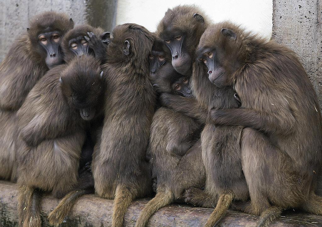 More Fun Than a Barrel of Monkeys
