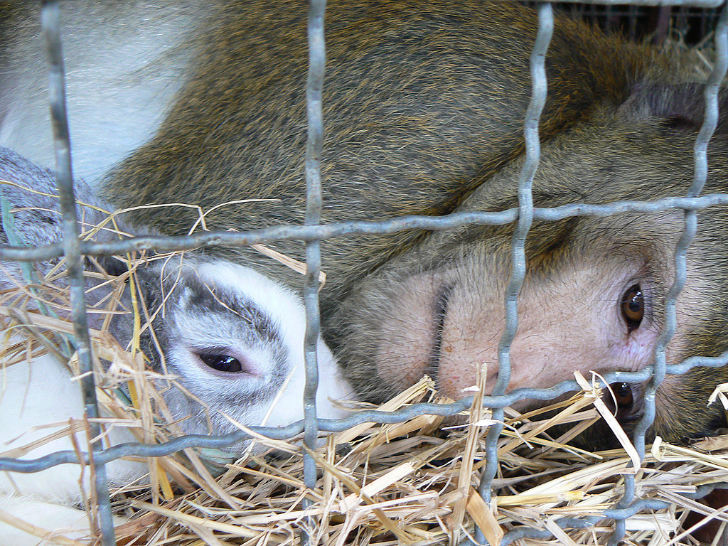 A Wild Monkey Gets Saved