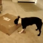 Do Tell: Do Your Pets Open Boxes?