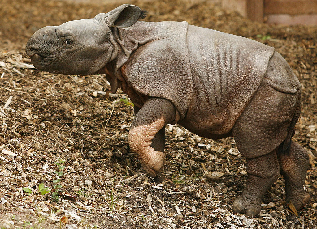 Rhino Be Nimble, Rhino Be Quick