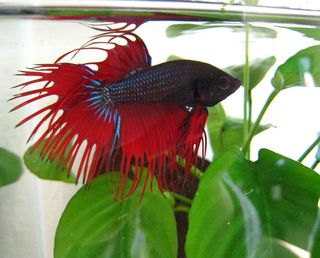 Popular Pet Fish Names Most Popular Pet Names For Animals Other Than ...