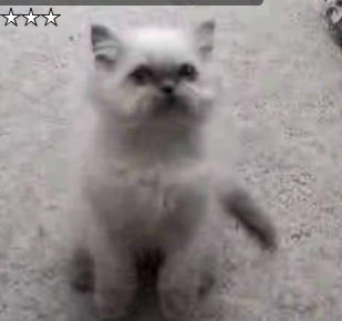 Cat Doesn't Want to Be Combed