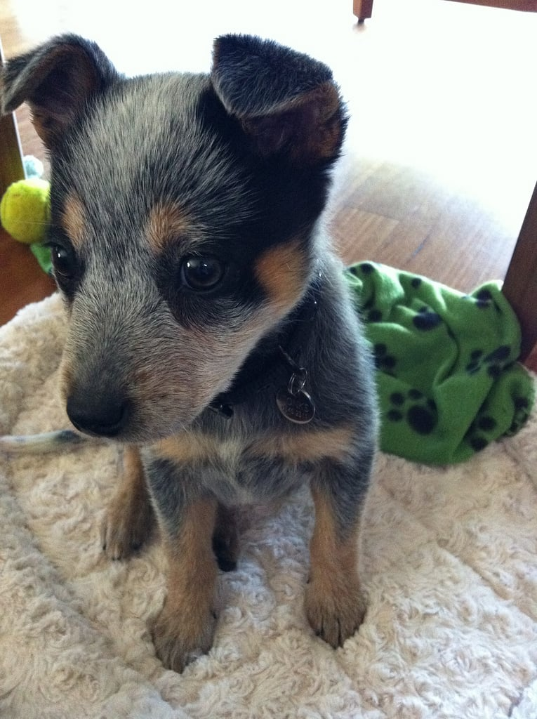 Every pup deserves a pensive moment during playtime. Source: Flickr user netfledge