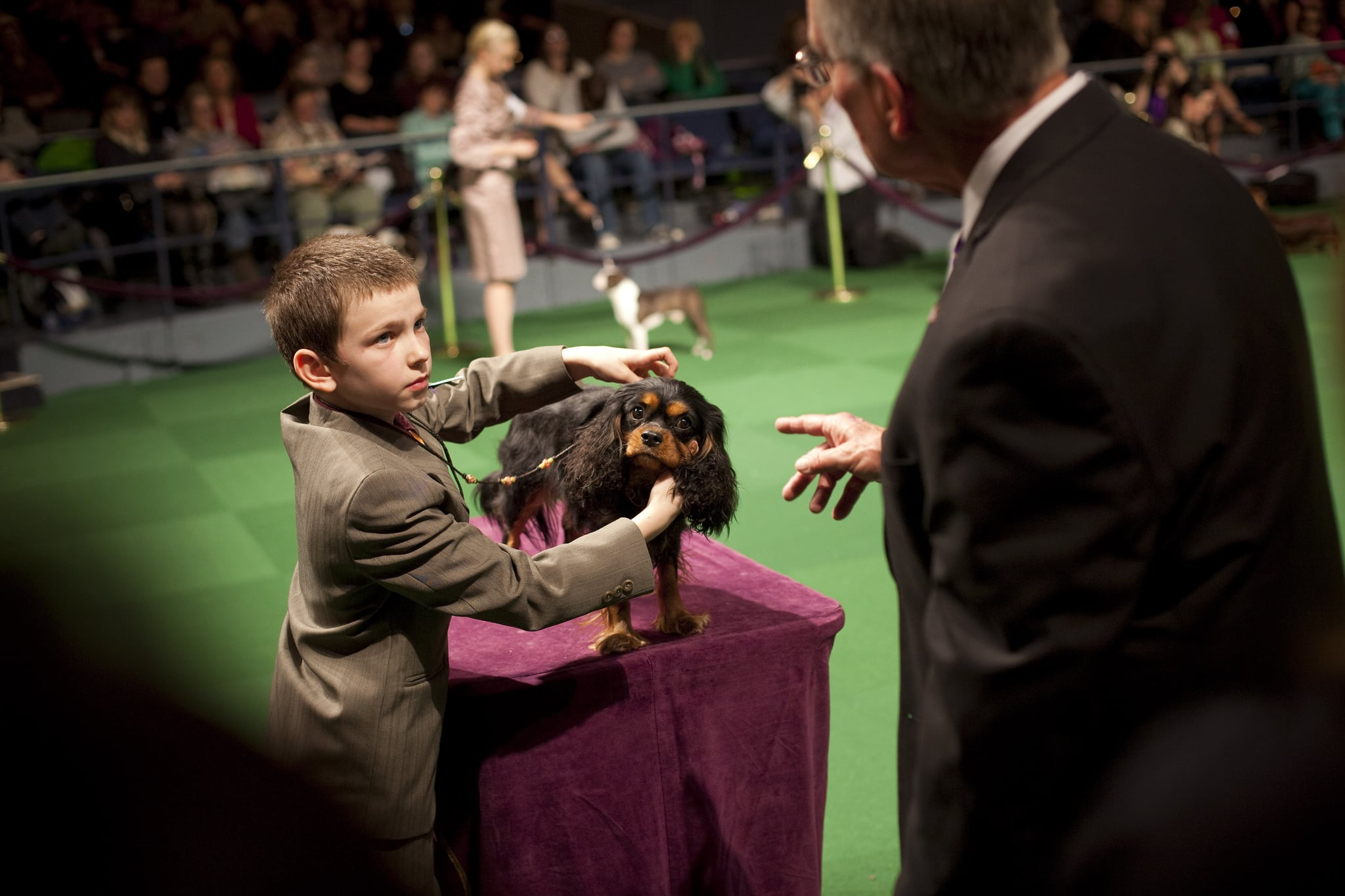 Stella, the Cavalier King Charles Spaniel, teaches her young handler a thing or two about life in the ring.