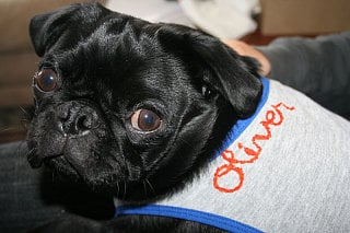 Cute Alert: Oliver Is Gettin' Mesmo-rized...