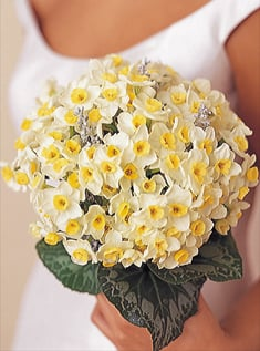 Flowers 101: Daffodils