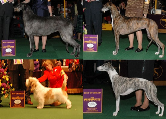2010 Hound Group Winners at Westminster