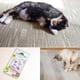 Quaker Pet SuperCat Catnip Crumples