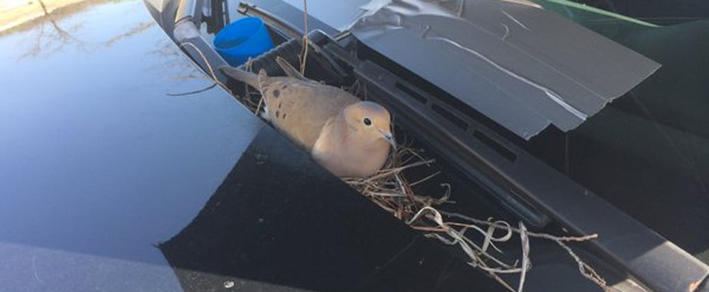 What These Cops Did For a Nesting Mama Bird Will Make You Smile