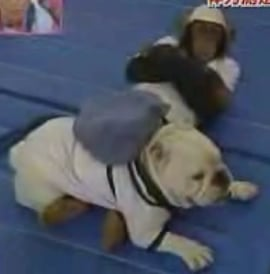 Interspecies Physical Fitness