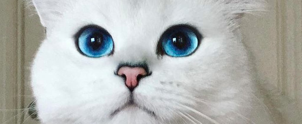 11 Adorably Famous Cats to Follow on Instagram