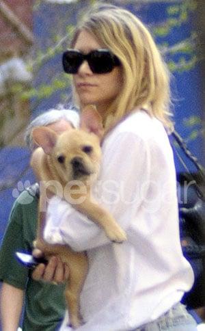 Ashley Olsen Gets a French Bulldog