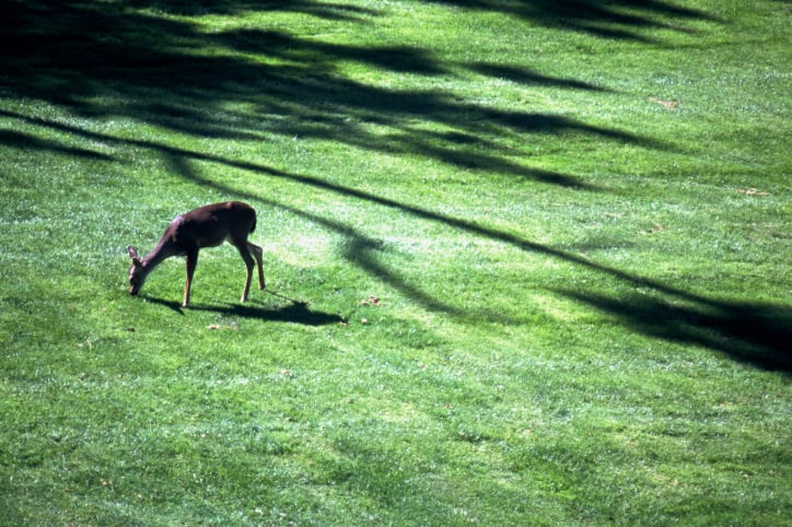 How To Keeping Deer Out Of Your Garden Popsugar Home