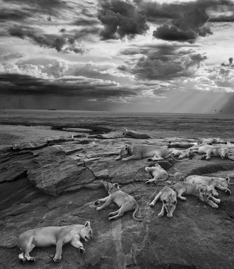 Peep the Top Pics From the Sony World Photography Awards