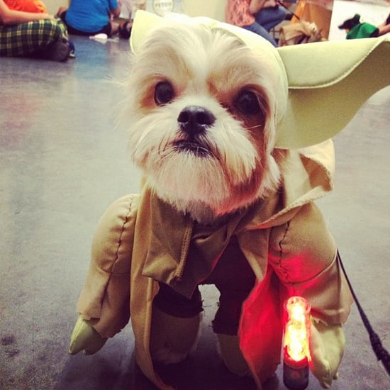 Google's Top Halloween Pet Costume Searches | List