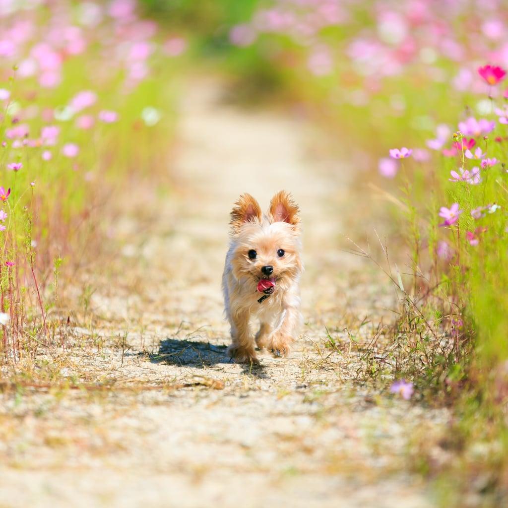 Play Impromptu Doggie Sports