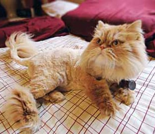 Catscaping Is the Newest in Pet Grooming Trends