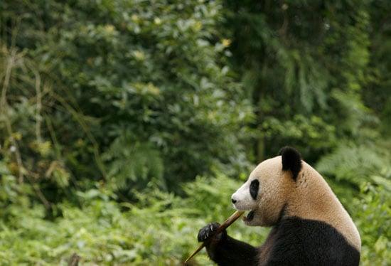 Panda Quiz on Petsugar