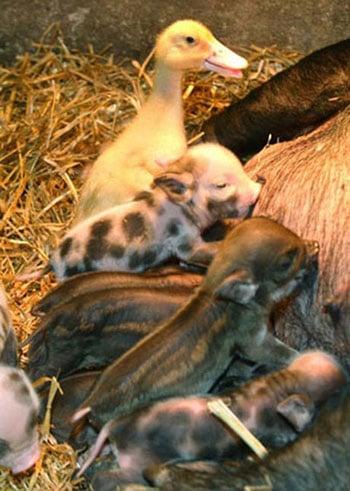 Cute Alert: Interspecies Lovin' Kicks It Up a Notch