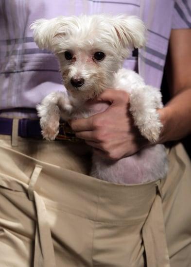 Fashion Forward or Faux Pas: Vivienne Westwood Dog Pouch?