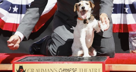 RIP Uggie the Dog: 'The Artist' and 'Water for Elephants' Star Dies at 13