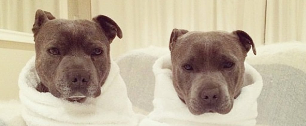 It's a Nonstop Pajama Party For These Puppy Brothers