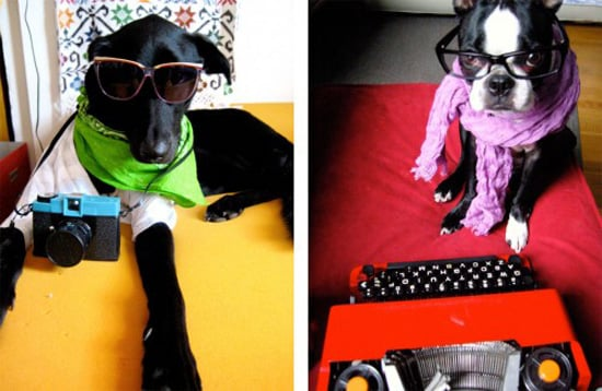 What Are Hipster Puppies?