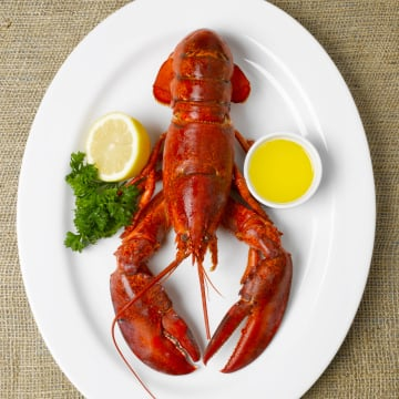 Do Lobsters Scream When Boiled?