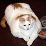 Prince Chunk Died and Overweight Cat in New Jersey News First Thought to Be Princess Chunk