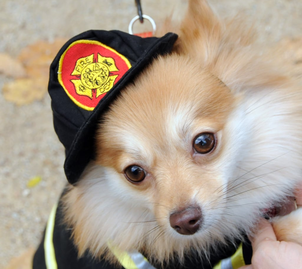 Chief Dog