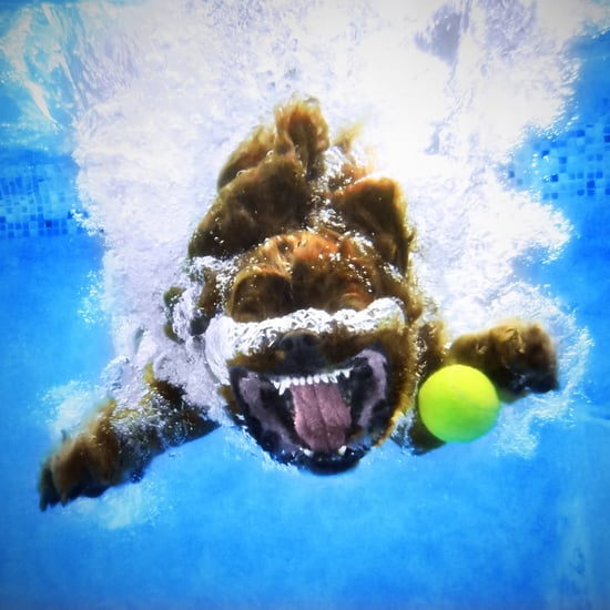 Pet Photography Tips From Underwater Dogs' Seth Casteel
