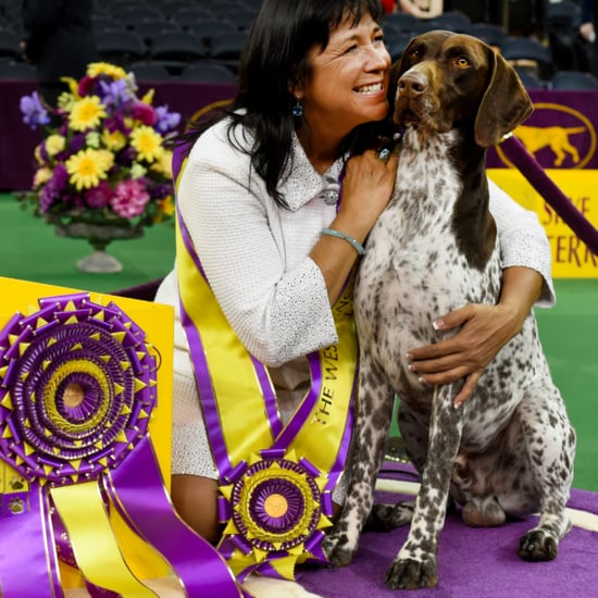 2016 Westminster Kennel Club Dog Show Best in Show Winner