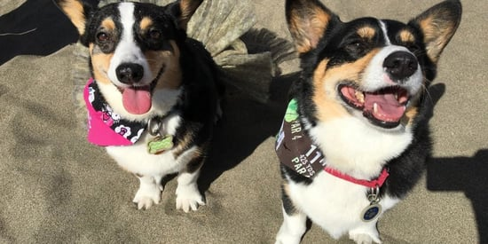 Corgi Con Is Heaven On Earth, And These Adorable Photos Prove It