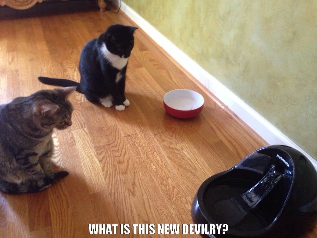 """""""We got a new water bowl for our cats that has constant flowing water. They sat like this for over an hour."""" Source: Reddit user dajuice32 via Imgur"""