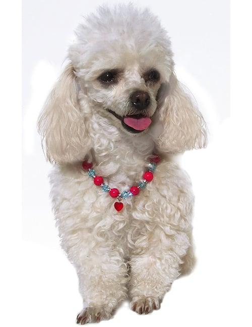 Slip this Swarovski Hot Girl Necklace ($70) around your dog's neck and promptly bring over a mirror. She'll look and feel like a million bucks.