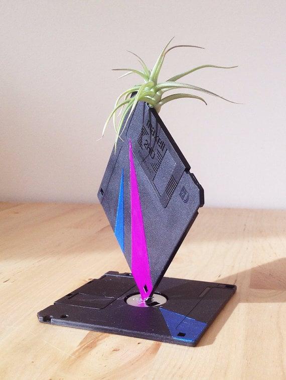 Grow an air plant