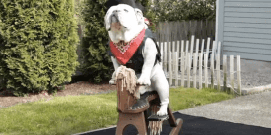 It's Friday. You Need To See This Bulldog Ride A Rocking Horse.