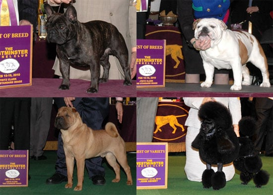 2010 Non-Sporting Group Winners at Westminster