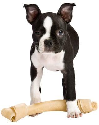 Do Dog Ears Droop When Teething