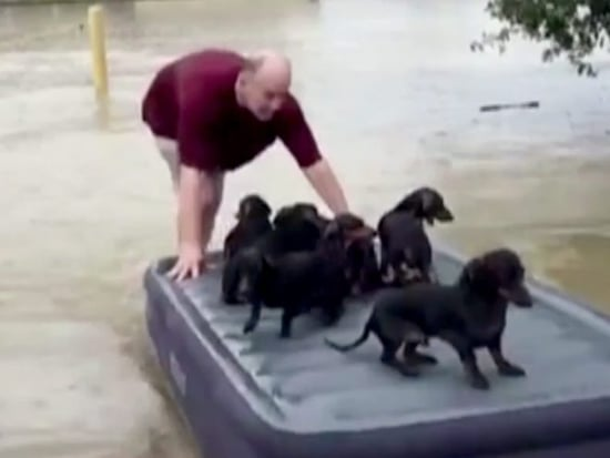 Louisiana Man Uses Air Mattress to Rescue Dogs from Flood