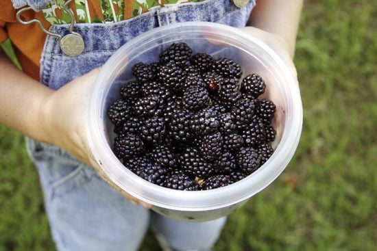 Pick Your Own Berries to Have a Healthy, Fun Weekend Activity