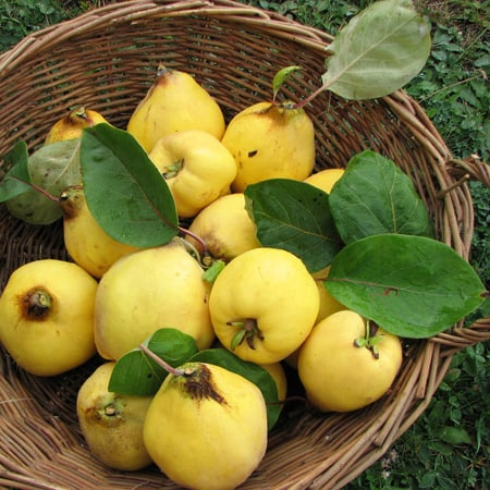 How to Use Quince