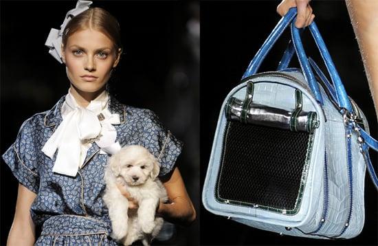 New Product Alert! Dolce & Gabbana Miss Dog