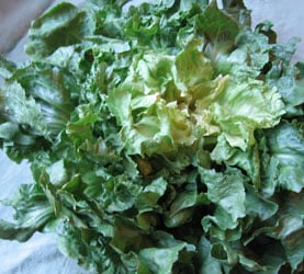 Another Way to Go Green:  Escarole